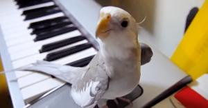 papagalul-tuturo