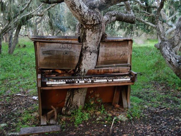 1. Un copac ce a crescut într-o veche pianină, Fort Ord, California.