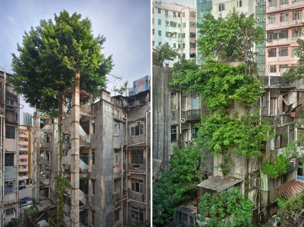 2. Copacii învingând betonul în Hong Kong.