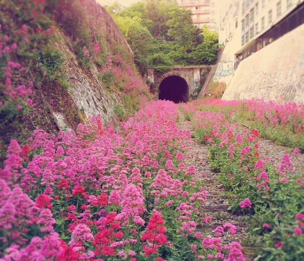 3. Cale ferată interioară abandonată în Paris.