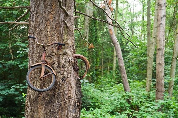 4. Bicicleta înghiţită de un copac din Vashon Island, Washington.