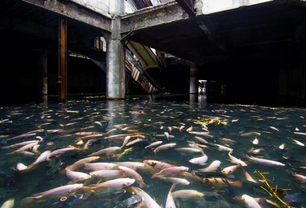 5. Mall abandonat transformat în acvariu, Bangkok.