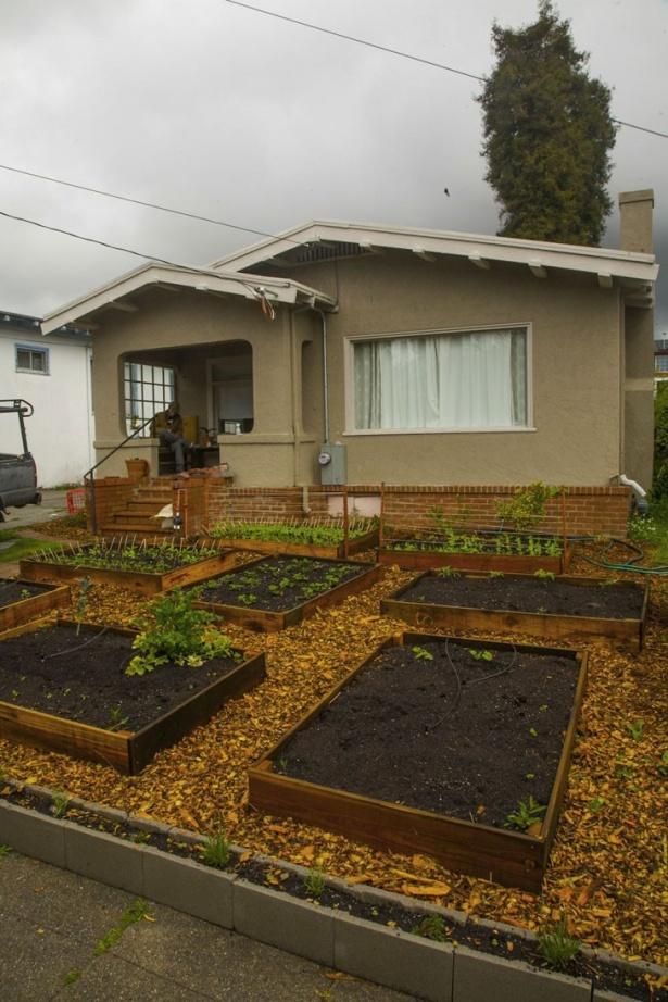 Pentru proprietar, cea mai grea parte a fost dezvoltarea unui sistem de irigare astfel încât fiecare parceluţă cu plante să beneficieze de apă.