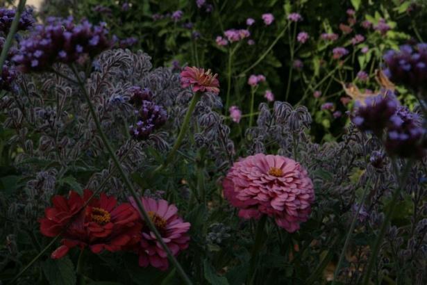 Nu au fost uitate nici florile ornamentale pentru a înveseli grădina!