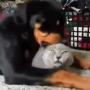 cainele-alinta-pisica