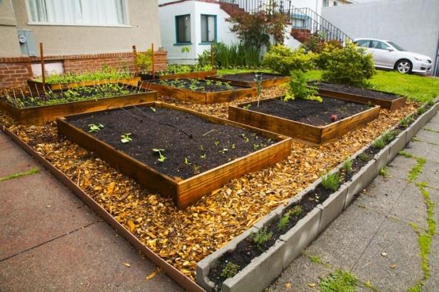 Pe măsură ce plantele creşteau pe araci, totul părea mai ordonat. Aceasta este o modalitate bună de a maximiza spaţiul.