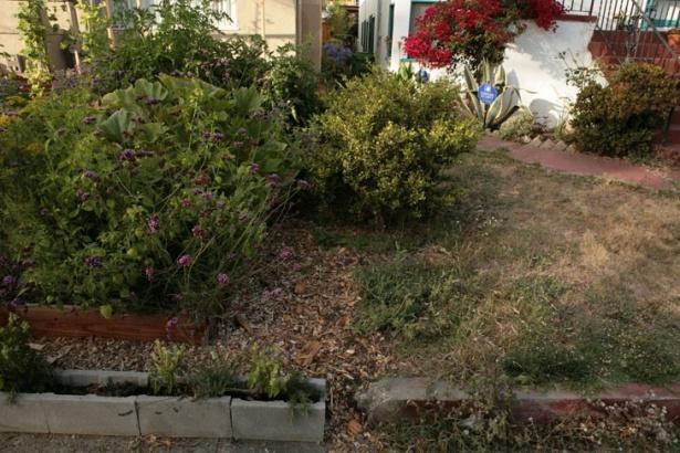 O privire aruncată către gazonul vecinului ne face să ne întrebăm: Oare care peluză arată mai bine?