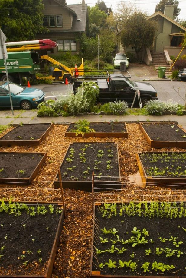 Sistemele de sprijin au început să se înmulţească pe rând de îndată ce seminţele au început sa germineze în cutiile pline de compost.