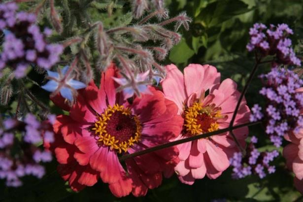Desigur, câteva flori plantate nu au rănit pe nimeni. Dimpotrivă, ele aduc o pată de culoare grădinii.
