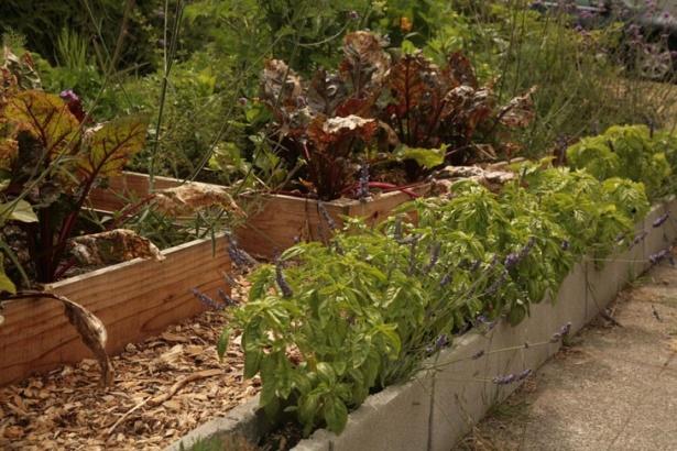 Lavanda, rozmarin, cimbru, busuioc şi alte plante aromatice de-a lungul aleii.
