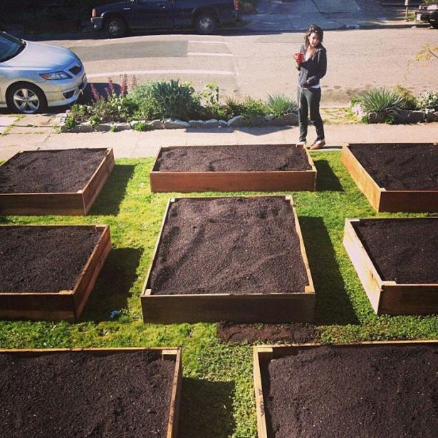 Având în vedere că oraşul oferea compost gratuit, a făcut rost de o cantitate potrivită de îngrăşământ, l-a aşezat frumos în cutii şi iată ceea ce a rezultat.