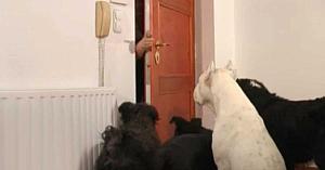 Aceşti câini îşi doresc din toată inima ca stăpânii lor să aibă un Crăciun minunat