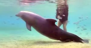 femela-delfin