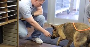Momentul în care acest câine îşi regăseşte familia după 7 luni este emoţionant până la lacrimi