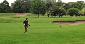 jucatorul-de-golf-si-vulpea