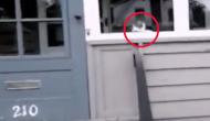 postas-vs-pisica