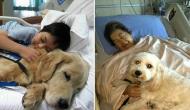animale-spital