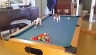 pisicile-pe-masa