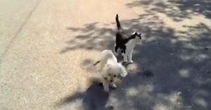 cainele-orb-si-pisica