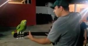papagalulpechitara
