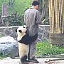 pandasiingrijitorul