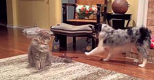 pisicimandre