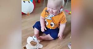 bebesijucaria