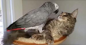 pisicisipapagali