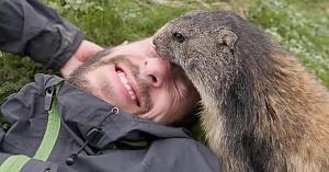 Marmota îşi înfrânge teama de oameni şi îi oferă acestui alpinist un moment memorabil