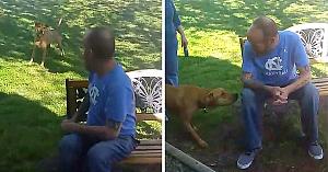 Câinele îşi revede stăpânul după 5 săptămâni de absenţă. Când îşi dă seama cine se află pe bancă - nu îşi poate stăpâni emoţiile