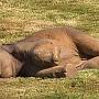 elefanteluldoarme