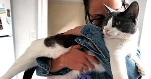Până să o întâlnească pe actuala stăpână, această pisică fusese abandonată de 5 ori. Acum viaţa ei s-a schimbat complet