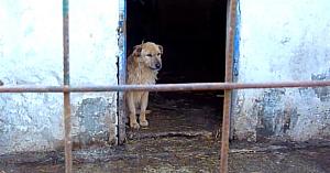 Cuprins de suferinţă, acest câine parcă uitase să trăiască... până când un suflet bun i-a dat o nouă şansă