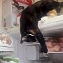 pisiciviclene