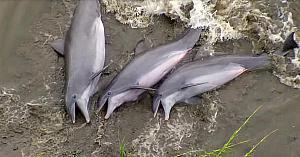 3delfini