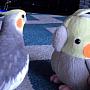 papagaluldeplus