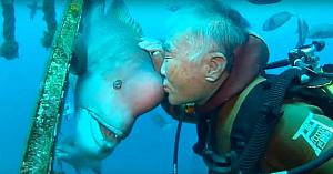 În anii '90 acest scafandru japonez a întâlnit un peşte. Priviţi-i când se întâlnesc în faţa camerelor 2 decenii mai târziu