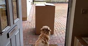 Nu-şi mai văzuse stăpâna de mult timp, însă atunci când iese din cutie... bucuria nu cunoaşte limite