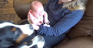 Mama o prezintă câinilor pe cea mai nouă membră a familiei. Reacţia lor este perfectă!