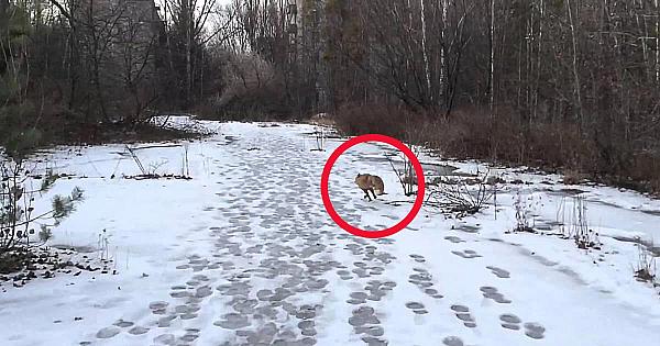 A ieşit la o plimbare prin pădurea înzăpezită, dar nu se aştepta niciodată la o astfel de întâlnire!
