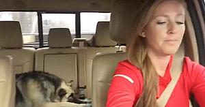 Stăpâna şi câinele se bucură de o plimbare cu maşina. Când muzica începe, priviţi reacţia patrupedului