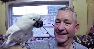 papagalulsyd
