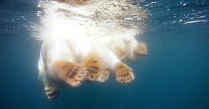 Au scufundat o cameră video în apele îngheţate ale Oceanului Arctic. Imaginile surprinse sunt uimitoare!