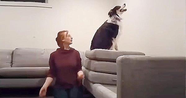 Acesta cu siguranţă nu este un câine obişnuit. Lucrurile pe care le face zi de zi te vor lăsa fără cuvinte!