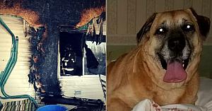 Câinele scapă din casa în flăcări - 60 de zile mai târziu îşi conduce stăpânii către o groapă aflată sub podea