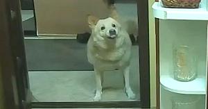 Proprietara îi cere câinelui să latre în şoaptă. Reacţia patrupedului e de tot hazul!