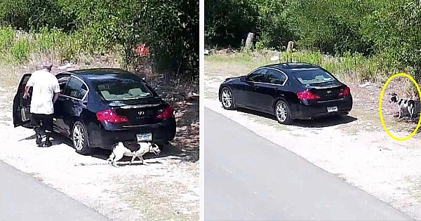 Un şofer opreşte maşina unde spera că nu îl vede nimeni. Imaginile surprinse i-au înfuriat pe toţi iubitorii de animale