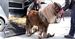 Acest ponei a fost neglijat întreaga sa viaţă. Acum are parte de o transformare spectaculoasă!