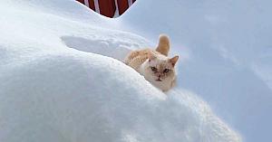Stăpâna îşi cheamă pisica în casă. Modul în care aceasta îşi face apariţia e de tot hazul