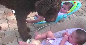"""Un câine uriaş se apropie de fetiţele gemene. """"Intenţia"""" lui o face pe mamă să pornească imediat camera video"""
